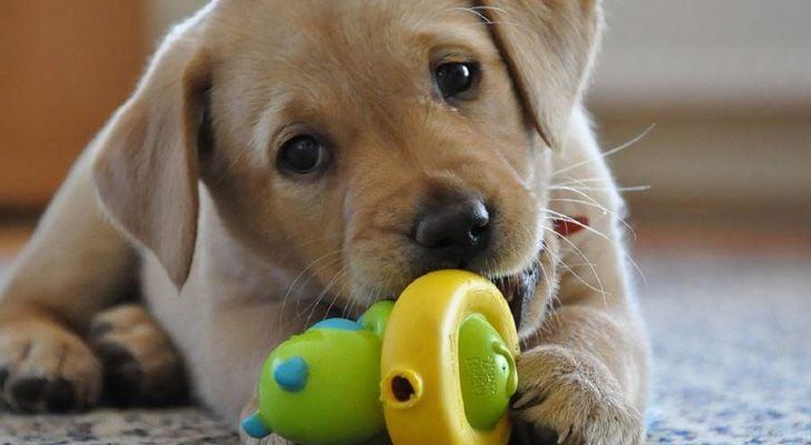 Los 10 mejores juguetes para perros - Capitán Ofertas 0581b6b5a7474