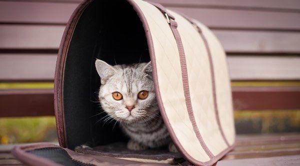 Las 10 mejores bolsas de transporte para mascotas