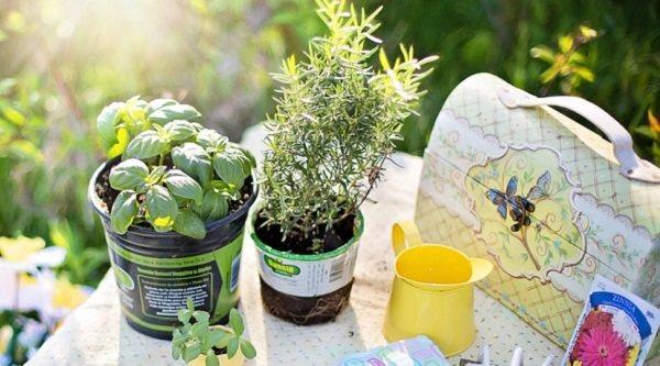 Los mejores accesorios para jardinería baratos