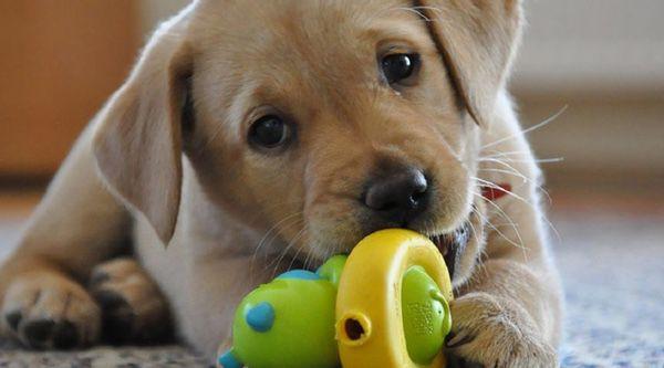 Los 10 mejores juguetes para perros