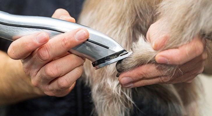 Máquinas cortapelos para mascotas: Guía de compra